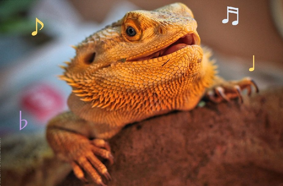 Do Bearded Dragons Like Music?