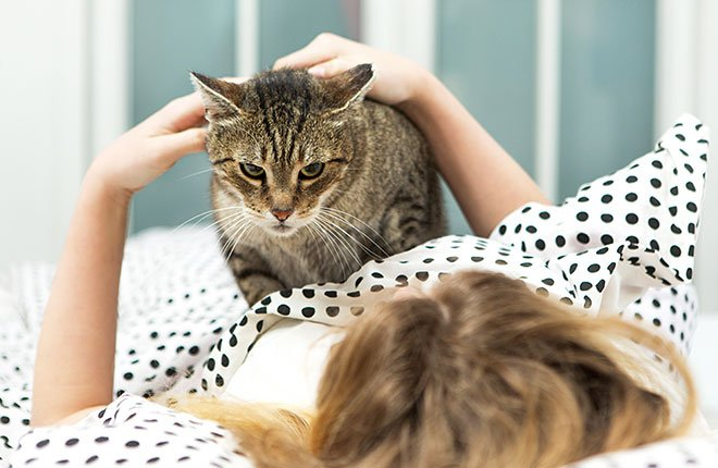 How to Stop Your Cat From Waking You Up in the Morning