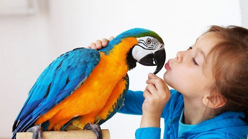 How to Tell if Your Bird is Bonded to You (7 ways!)