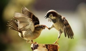 Can Birds Get ADHD (Attention Deficit Hyperactivity Disorder)?