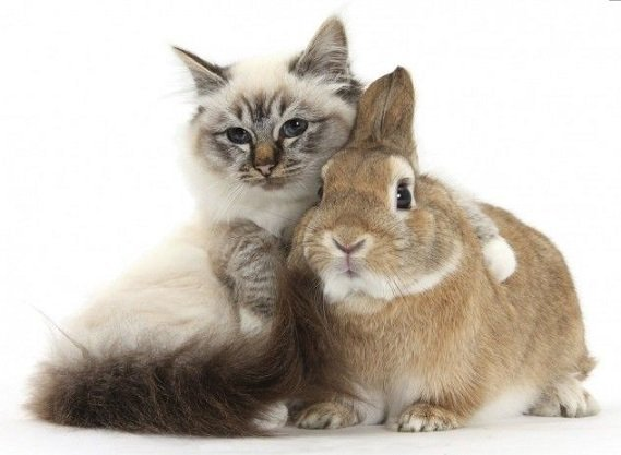 cat and rabbit can be friends