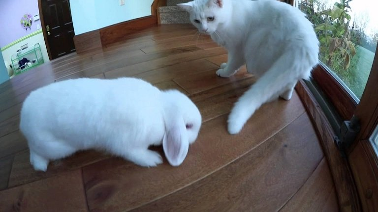 cat and rabbit in open space