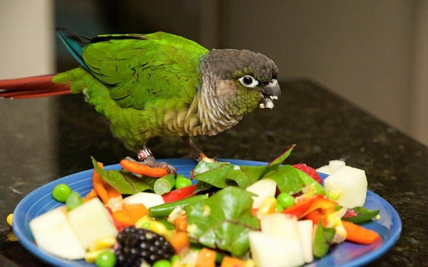 What Fruits and Vegetables can Conures Eat?