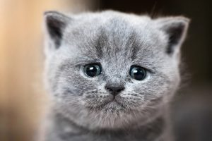 Will My Cat Run Away If I Get Another Cat?
