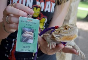 Can Bearded Dragons Be Emotional Support Animals? How To Register Them As ESA?
