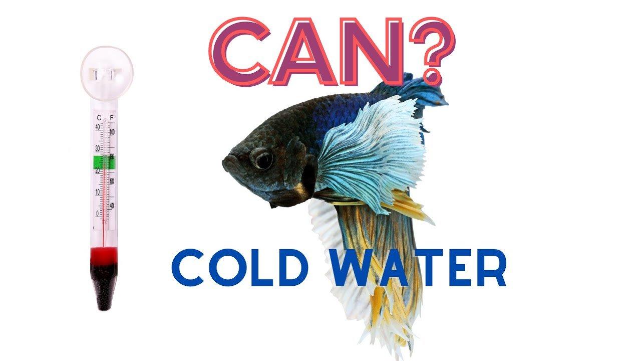 Can Betta Fish Live In 60 Degrees Fahrenheit?