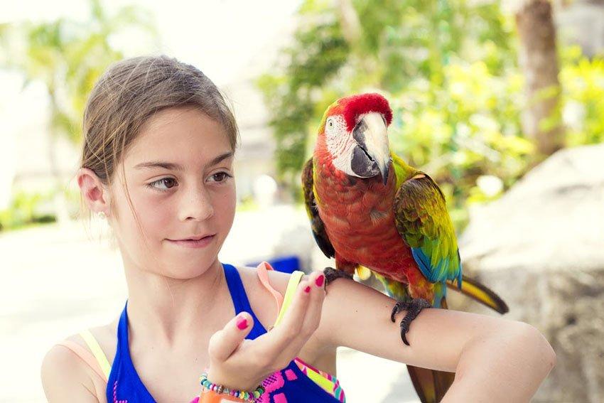 How To Teach A Bird To Do Tricks