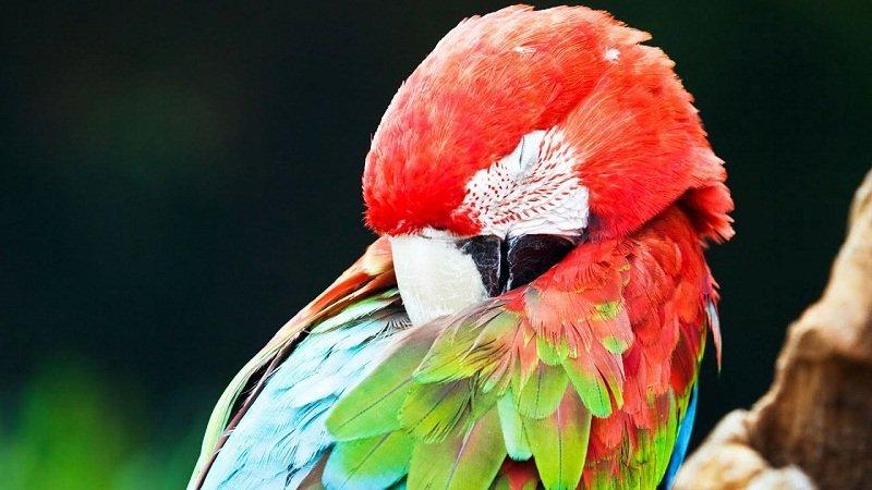 How Much Sleep Do Birds Need?