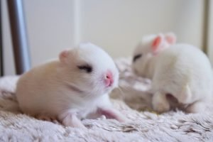 At What Age Do Baby Rabbits Open Their Eyes?