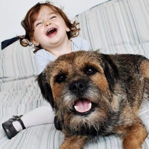 Border Terriers Are Okay To Have Around Kids