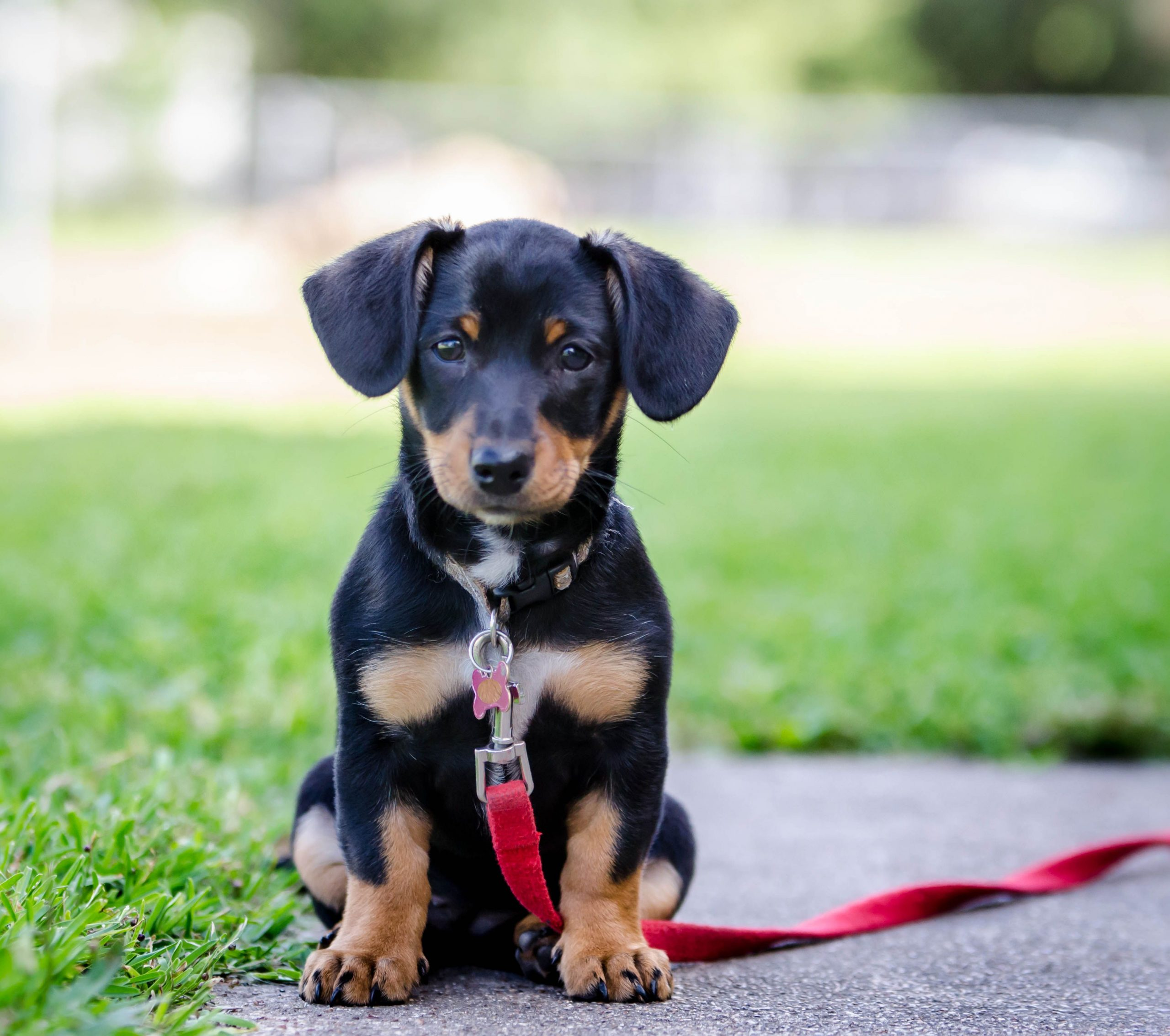 Can Cross Breed Dogs Reproduce?