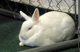 Do Bunnies Sleep With Their Eyes Open