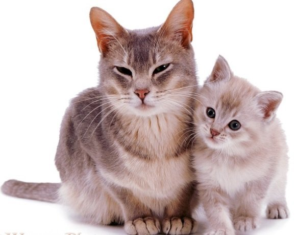 Do Cats Remember Their Mother?