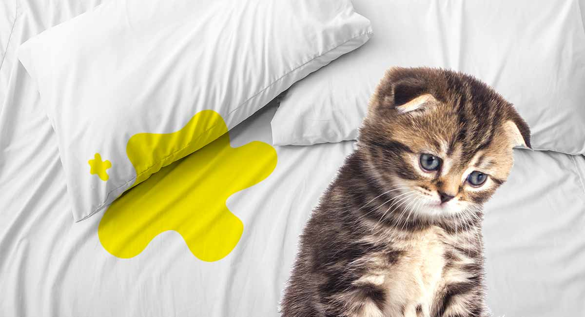 How To Prevent A Cat From Peeing On The Bed?