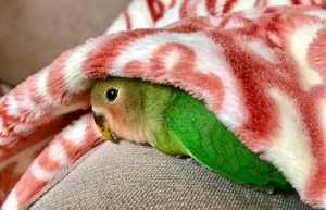 How To Tell If A Bird Is Stressed