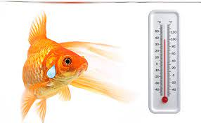 Metabolism And Cool Temperatures In A Fish Tank