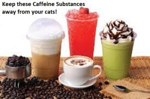 Keep these Caffeine Substances away from your cats!