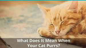 What Do Cats Mean When They Purr?