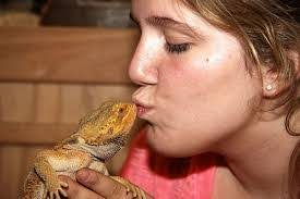 Why Do Bearded Dragons Make Good Pets?
