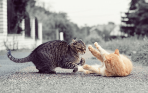 Why Do Cats Hiss And Growl At Each Other?