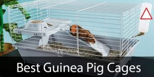 best-guinea-pig-cages