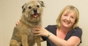 border terrier health care