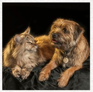 border terriers and cats