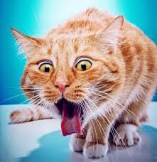 cats vomitting