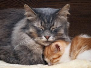 do cat mothers remember their kittens