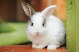 How To Keep A Single Rabbit Happy?