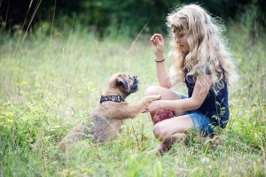 Are Border Terriers Easy To Train?