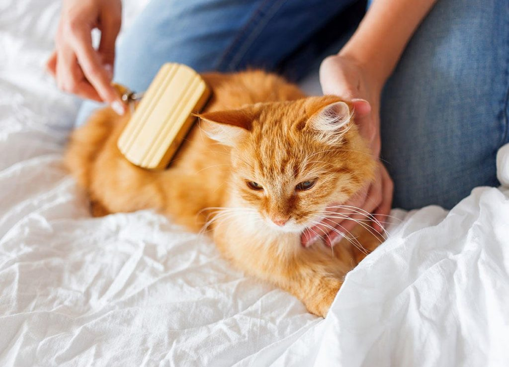 Brushing your cats fur