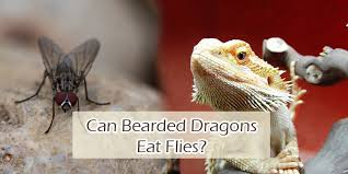 Can Bearded Dragons Eat House Flies