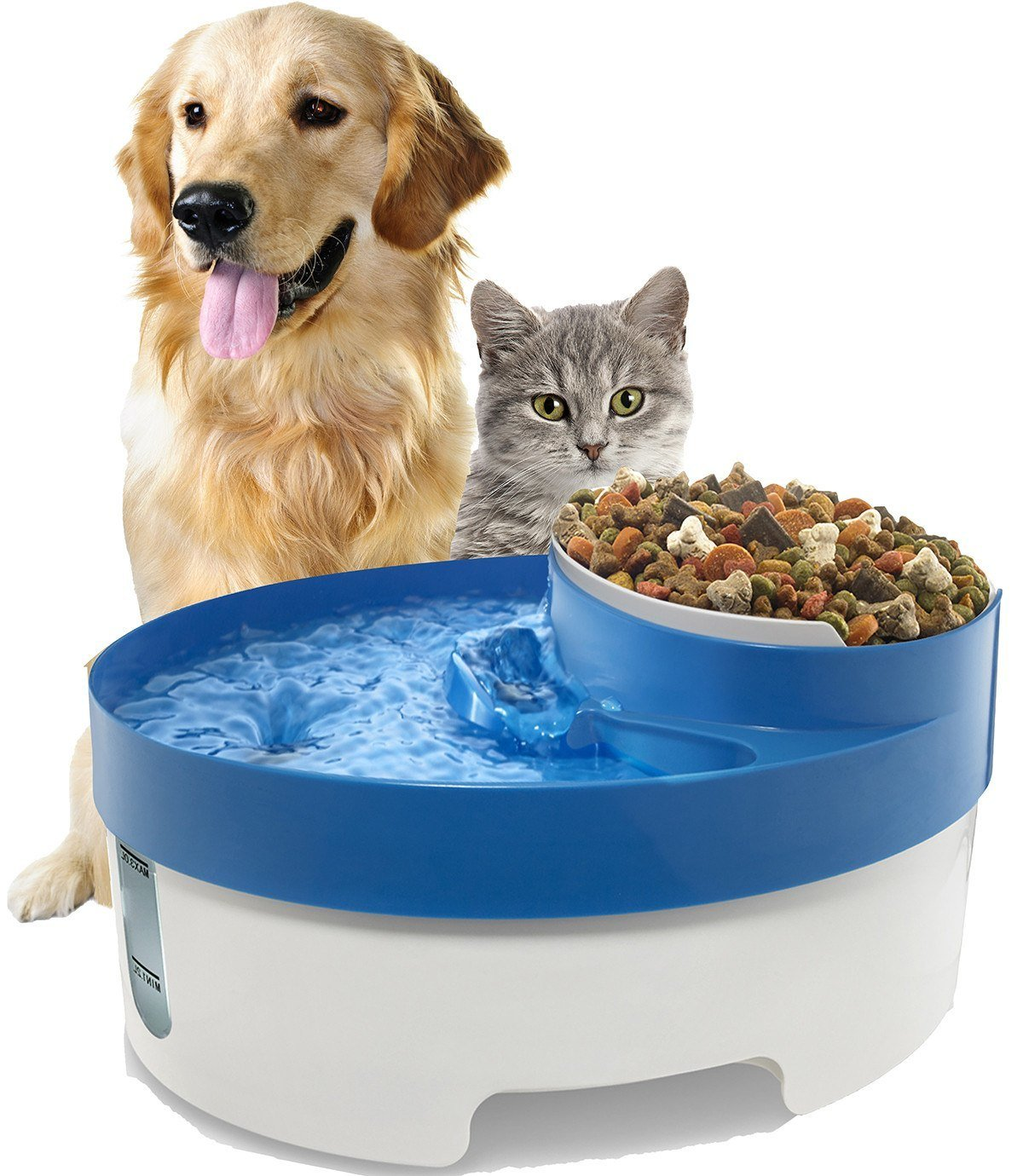 Can Cat And Dog Share Water Bowl