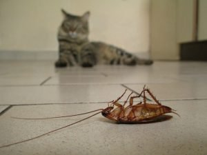 Will Cats Eat Cockroaches?