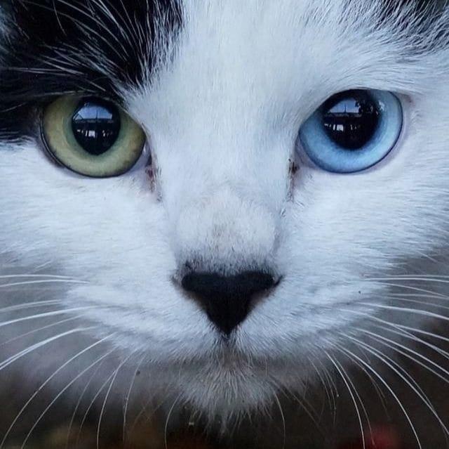 Cat Supernatural Powers