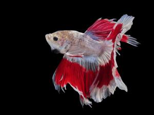How Often Should I Feed My Betta Fish Flakes