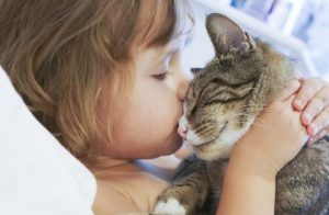 How To Show Affection To Your Cat?