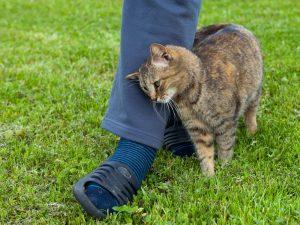 Why Does My Cat Rub Against My Legs?