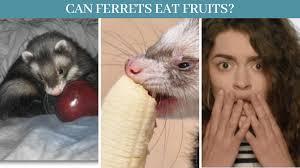 Can ferrets eat fruits?