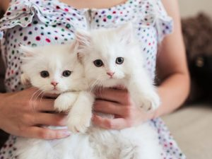 Should I Get Two Kittens From The Same Litter?