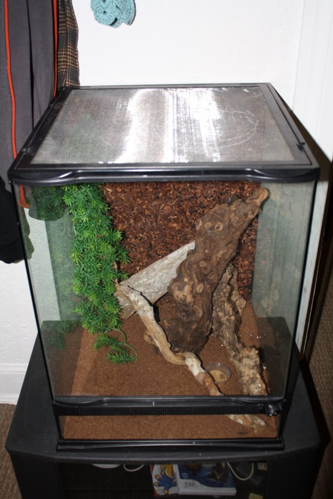 What Size Tank Do I Need For 2 Crested Geckos?