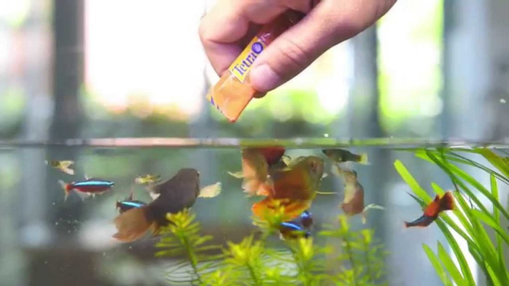 When it comes to tetras, bloodworms are an oft-integral part of their diet and health