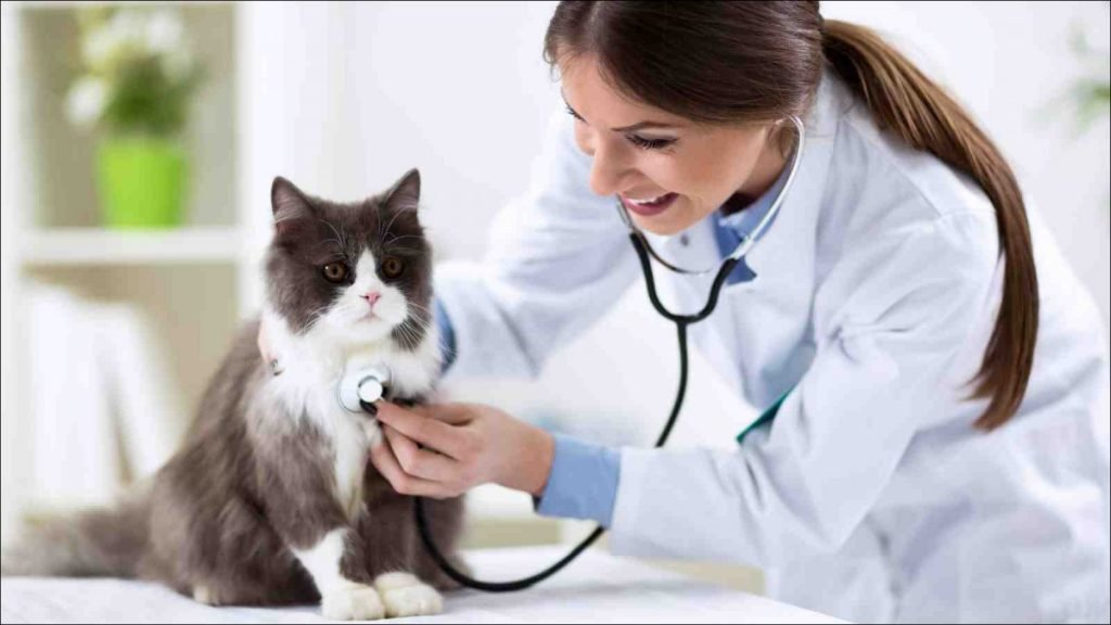 Take Your Cat To The Vet