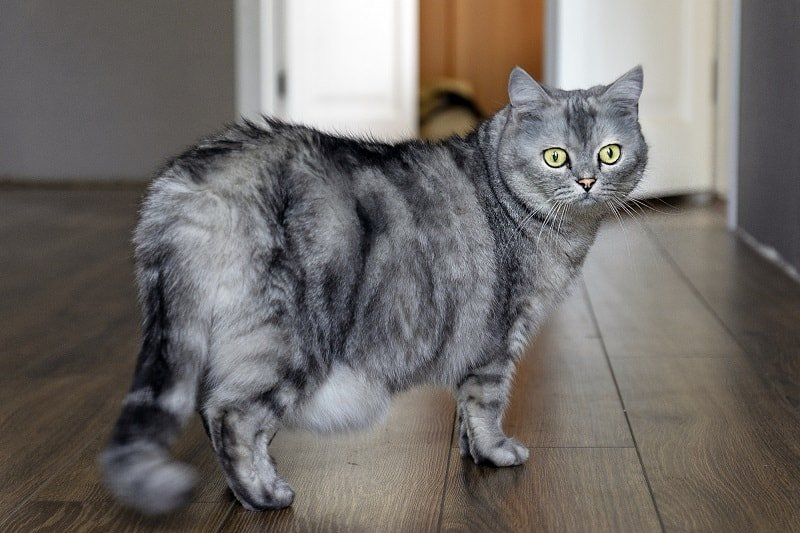 What Is The Youngest Age A Cat Can Get Pregnant?