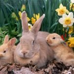 When Can Baby Rabbits Leave Their Mother?
