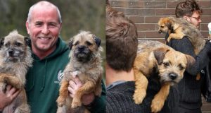 Talk to your border terriers