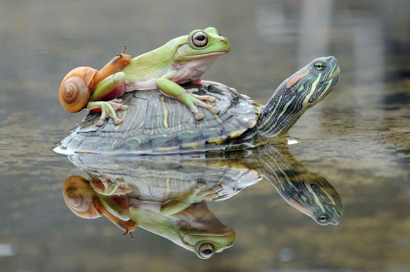 Can My Frogs and Turtles Live Together? Size Matters!