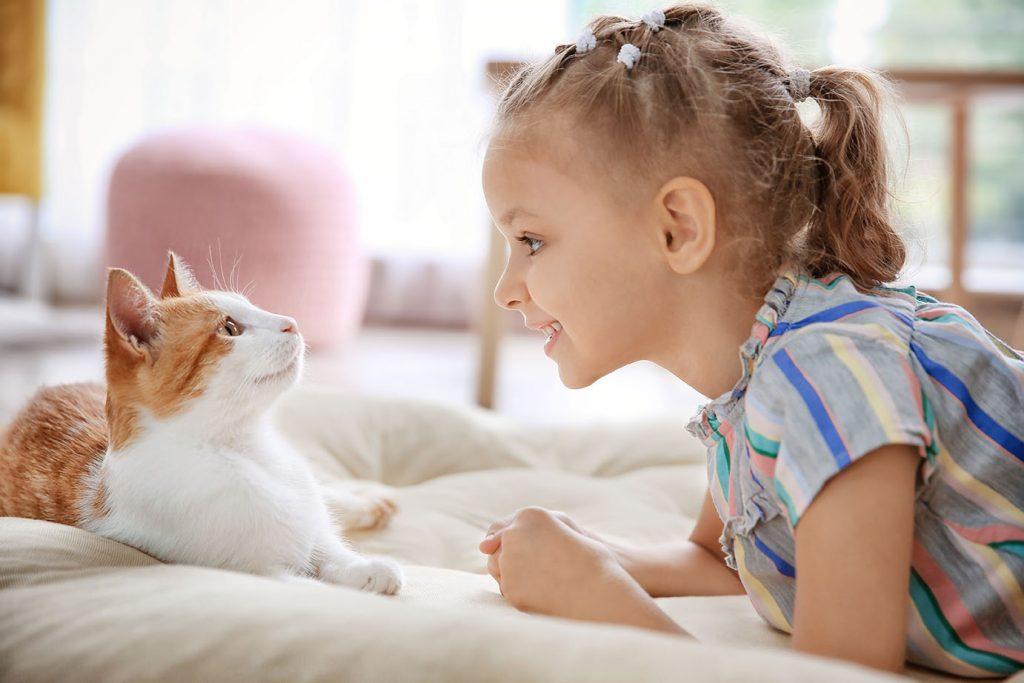 Cats sense human facial expressions