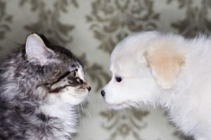 Why Do Cats And Dogs Hate Each Other?